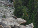 at the Forest Canyon overlook - what a chance encounter - a marmot about 100 yards down the slope