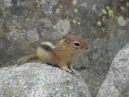 very cute and obviously well fed and acclimated; cute that is if they are not marauding in your garden