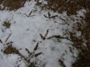 Here are turkey tracks outside the John Oliver cabin in Cades Cove.