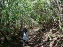One of several rhododendron tunnels on the trail - pretty enough in winter; really amazing in the spring