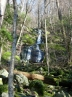 Fern Falls; on a north facing slope, which is very moist most of the time