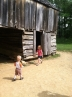 In and out of the barn at John Cable's farmstead.