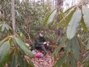 a secluded lunch in the rhododendron